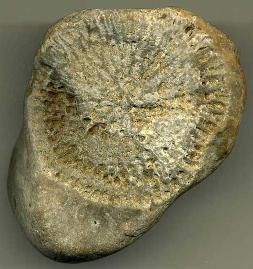 Fossil (445-65-million BC)